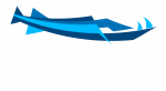logobarracuda